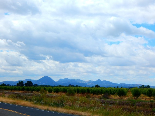 The Sutter Buttes dominate the valley near Gridley and are always a pleasant view.