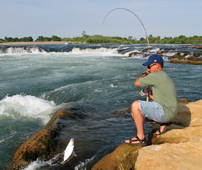 You'll often find shad stacked up below falls and rapids.