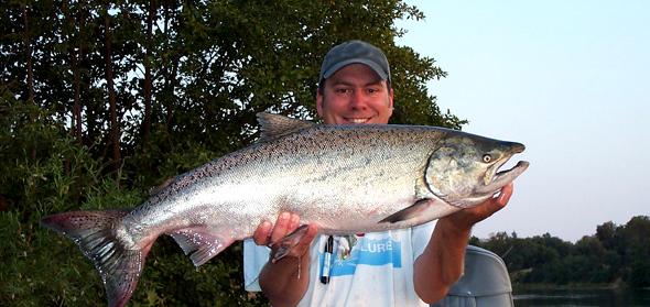 jd-salmon