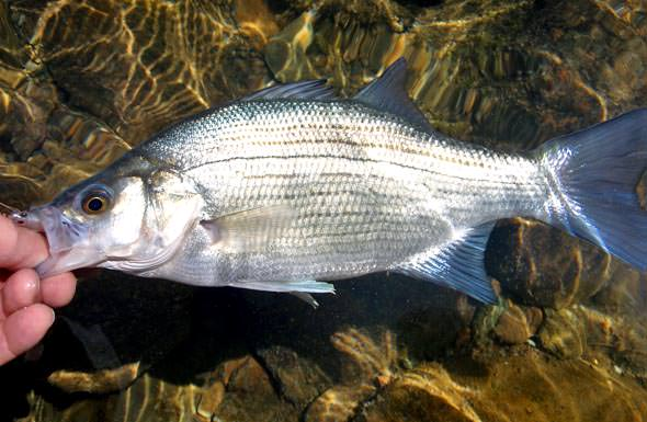 Fish Name  Betta Fish Names 2017  Fish Tank Maintenance