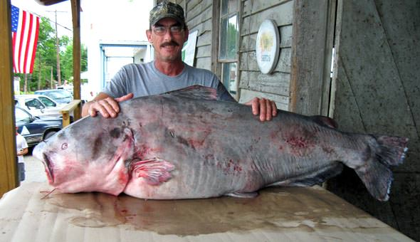 River Monster: The new world record Blue CatfishWorld Record Blue Catfish