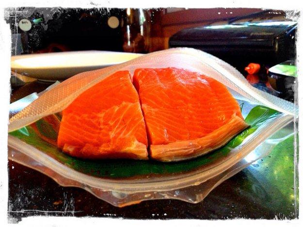 Salmon sucking time!