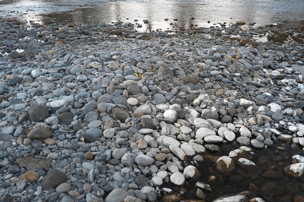Dry Salmon Nests