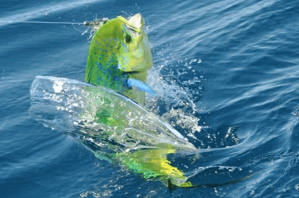 Photo: Mark Rayor/Jen Wren Sportfishing