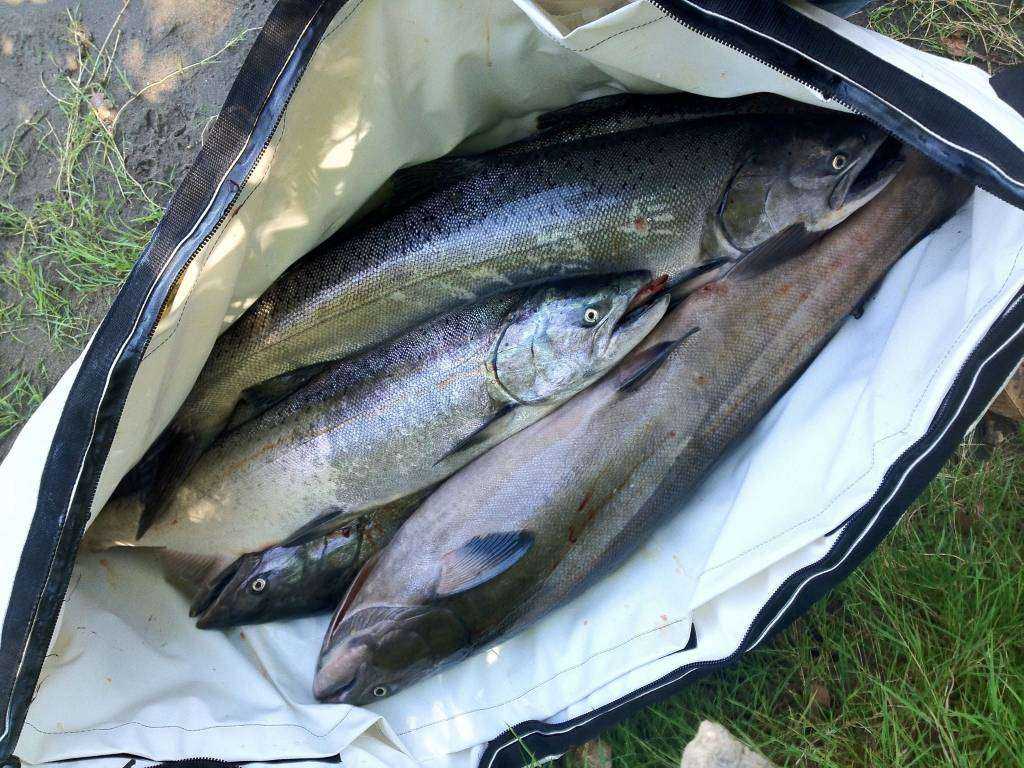 The best way to keep your catch fresh is a kill bag for Fish bag cooler