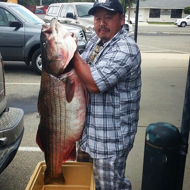Two of the biggest inland stripers ever caught for San luis reservoir fishing report