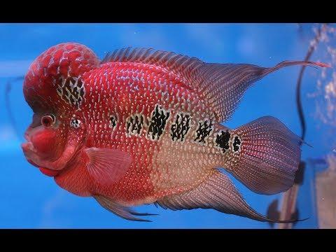 Choosing tropical fish