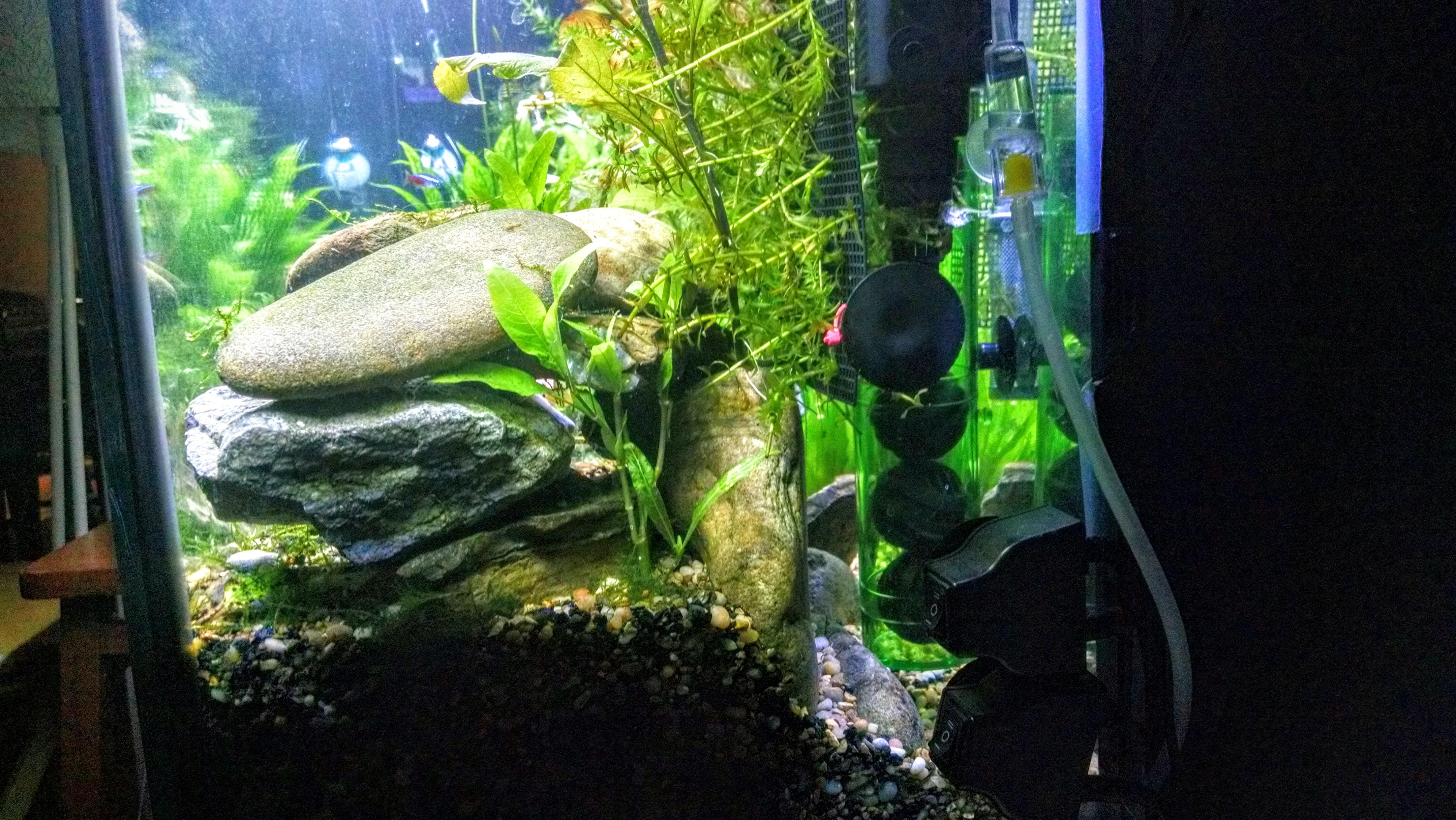 Hands on with the UP Aqua Inline CO2 Atomizer – Fishy Joe s Aquarium
