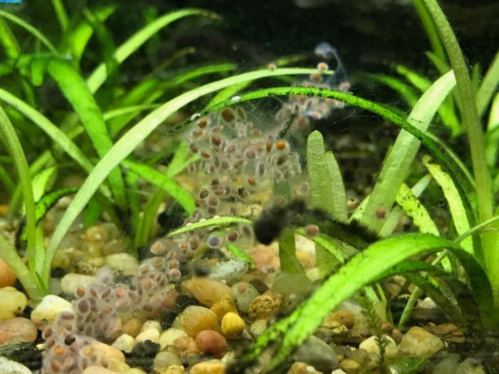 Cheap Aquarium Plant Seeds Day 2 – Fishy Joe's Aquarium