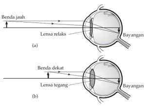 Mata Bagian Mata Dan Daya Akomodasi Mata