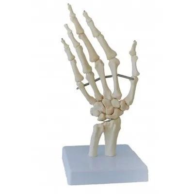 huesos-mano