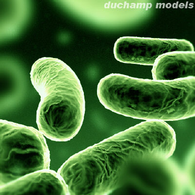 bacteria5