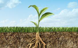 FISIOLOGIA VEGETAL  La Fisiologia vegetalTerapia de Sanidad Vegetal consiste en tratamientos para mantener el adecuado balance hormonal durante