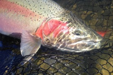 Fiskerejse Vinter steelhead i kitimat og chilliwack