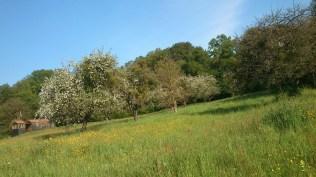 Saftige Wiesen und blühende Obstbäume
