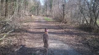 Der Wald hat sich gelichtet ...