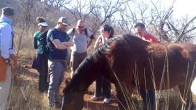 Hiking Klipriviersberg Johannesburg-7