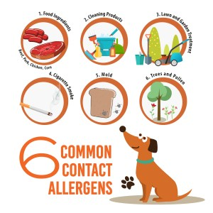 6 Common Contact Allergens
