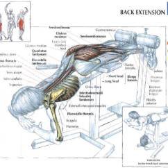 Roman Chair Back Extension Muscles Contemporary Leather Dining Room Chairs Why The Hyperextension Exercise Is So Important Worked Bench Benefits