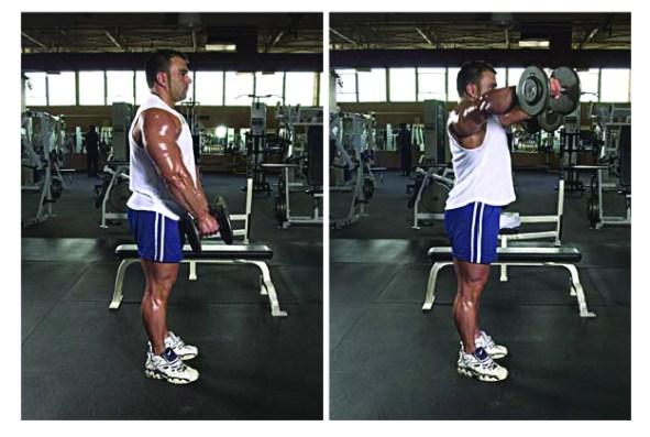 how to train serratus
