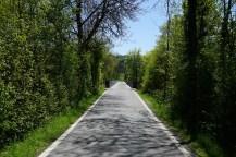 The road across the Wohleibrücke. One lane!