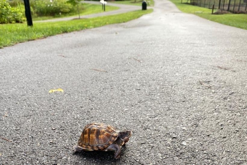 turtle on the walkway in the park