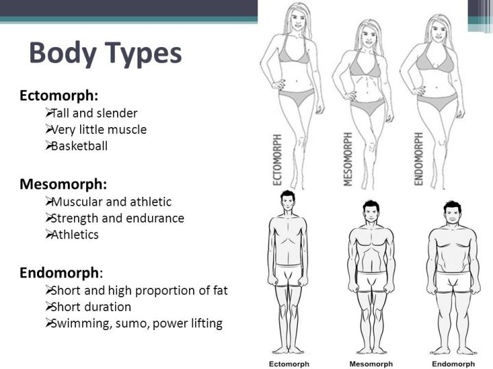 Body+Types+Ectomorph_+Mesomorph_+Endomorph_+Tall+and+slender