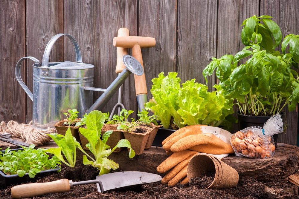 Come fare un orto in casa - Gli attrezzi
