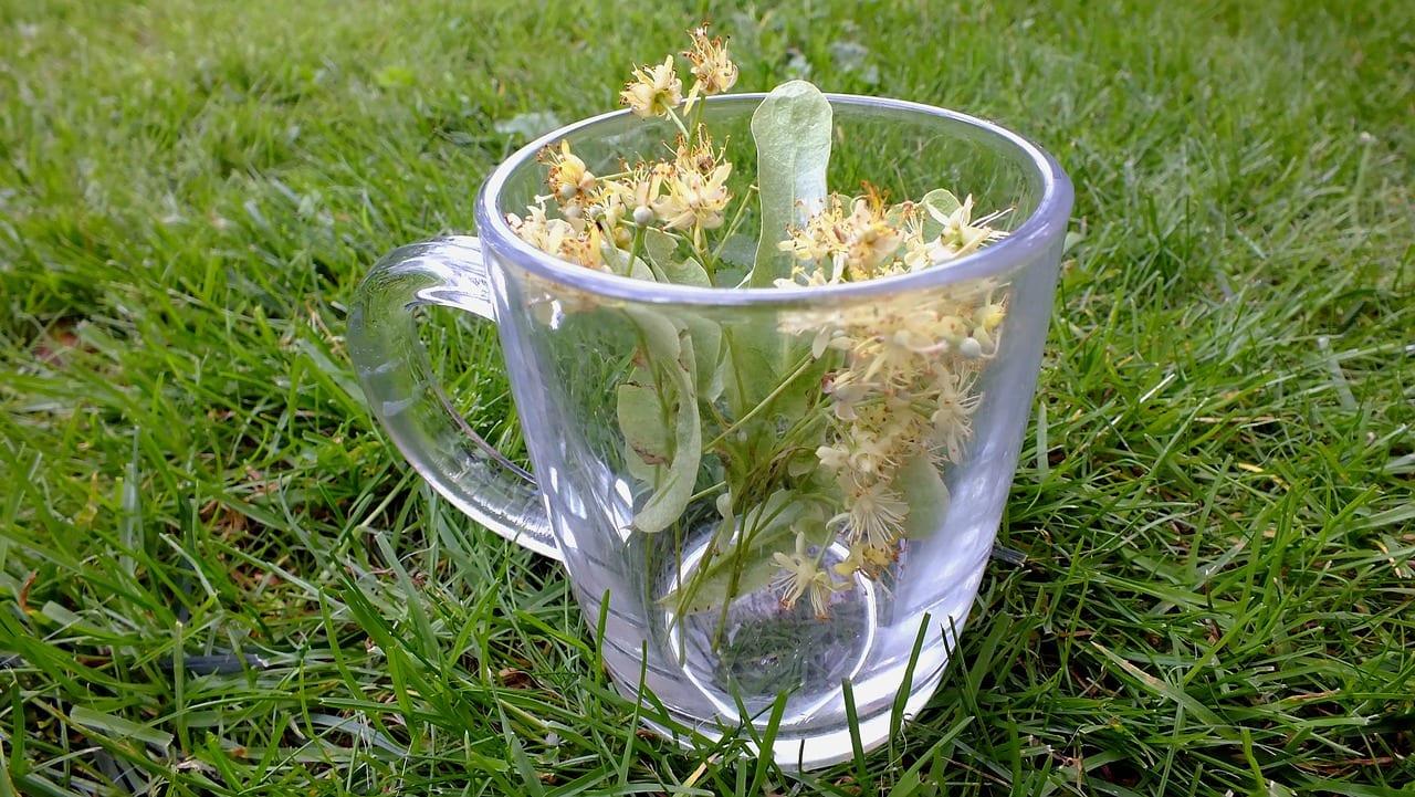 herbs-1823966_1280