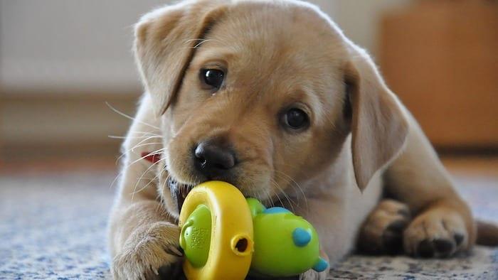 cane-cucciolo