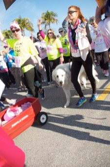race dog