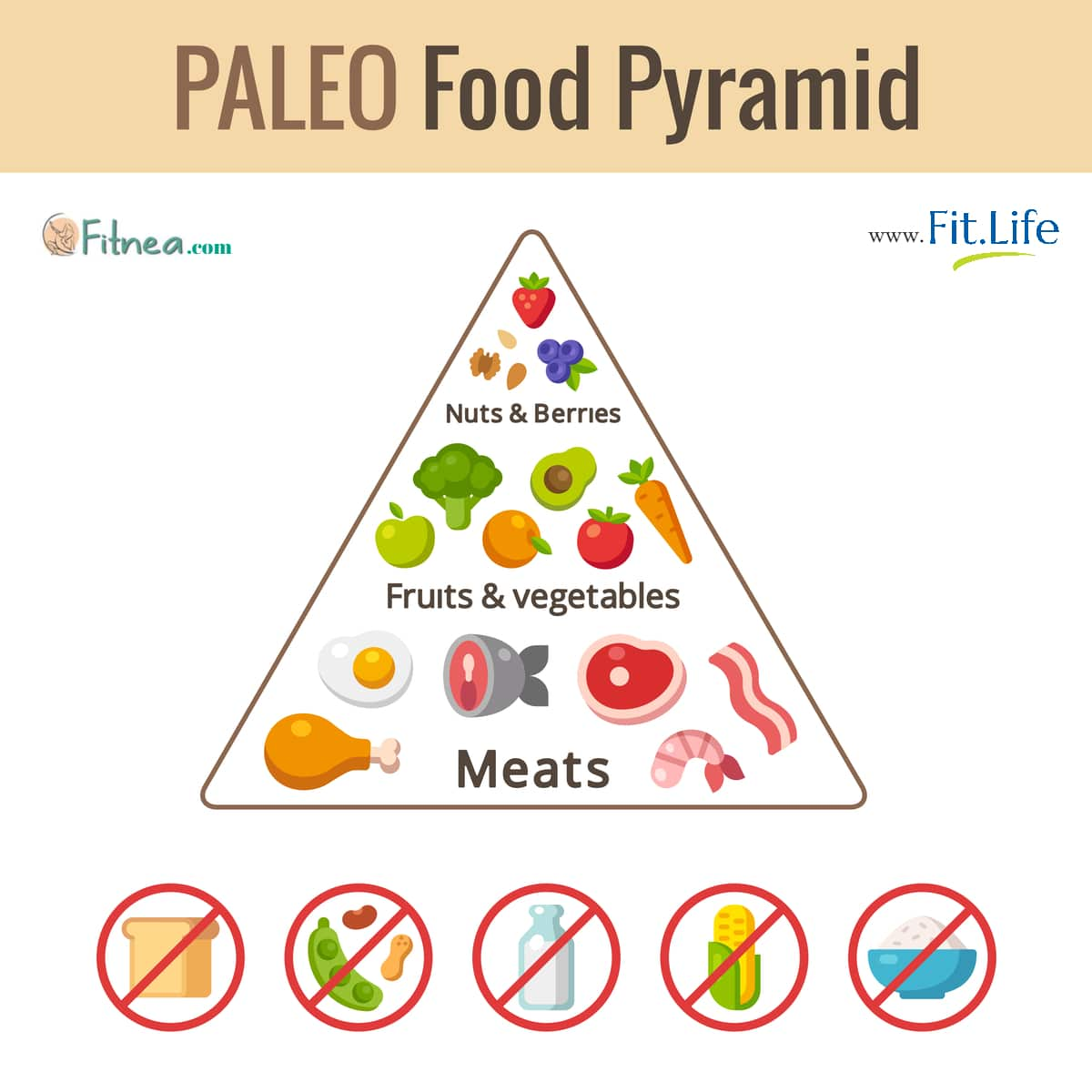 new food pyramid diagram 350 oil flow paleo what foods does it contain fitnea