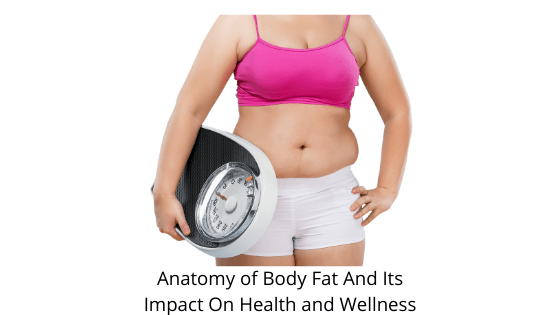 Anatomy of Body Fat And Its Impact On Health and Wellness