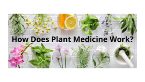 How Does Plant Medicine Work?