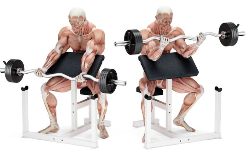 Illustration of preacher curl bench
