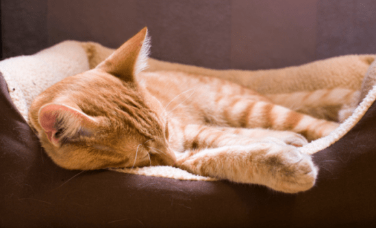 Relaxed-Cat