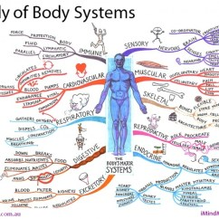 Concept Map Skeletal System Diagram Pioneer Deh P5800mp Wiring Bod-ecology? – Ottawa Personal Training