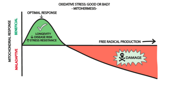 Oxidative stress causes emotional distress, a little bit might be beneficial, too much is bad