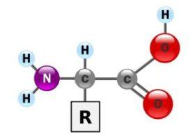 structure de l'acide aminé