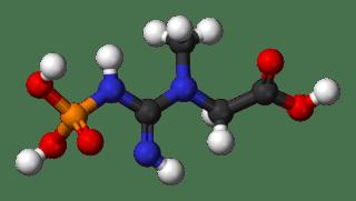 Phosphocréatine