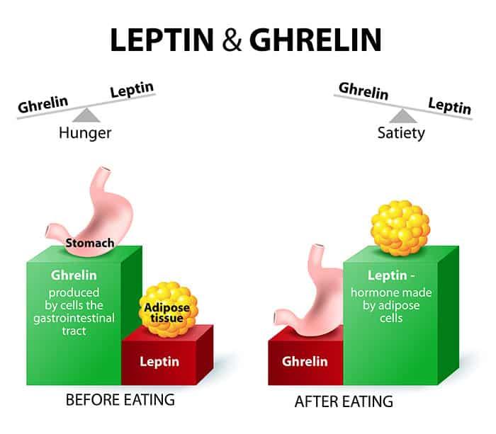 Leptin and Ghrelin