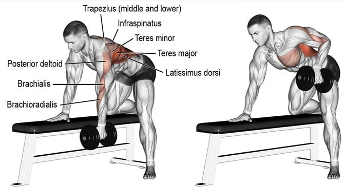 Bent Over Rows – Benefits Muscles Worked and Variations ...