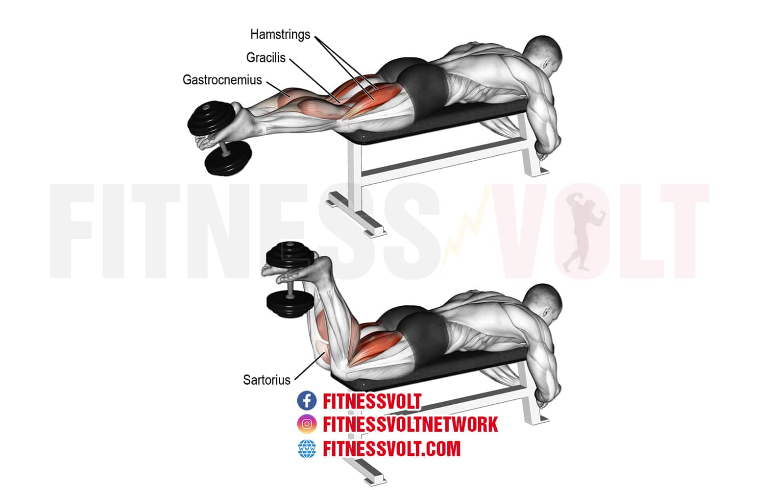 Dumbbell Leg Curl Hamstrings Fitness Volt