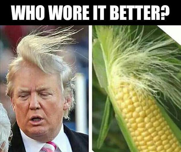 Funny Donald Trump hair photo - Fitness with PJ blog