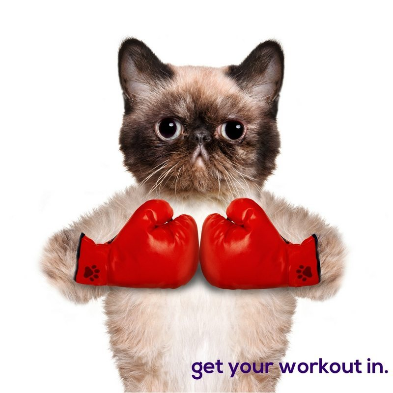 Funny-Workout-Cat-Photo