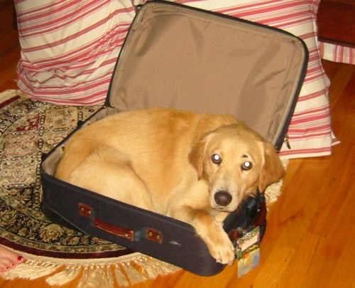 crosby_golden_traveling[1]