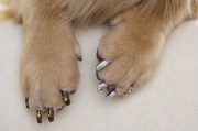 """fit """" furry's paw-paw guide"""