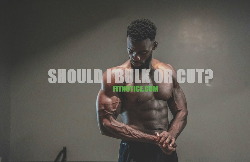 should i bulk or cut