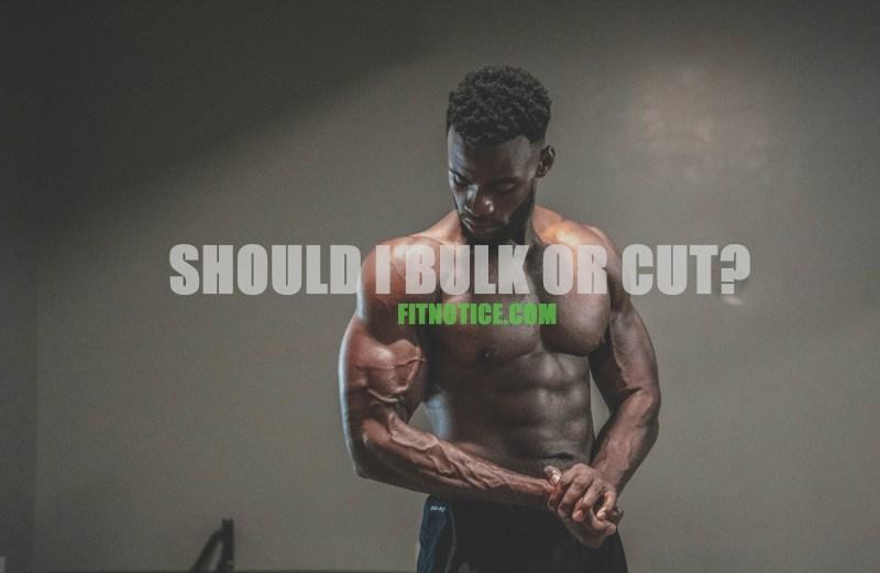 should i bulk or cut