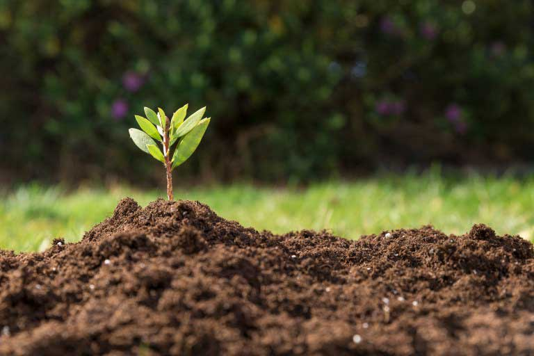 Componentes importantes para mantener la fertilidad del suelo